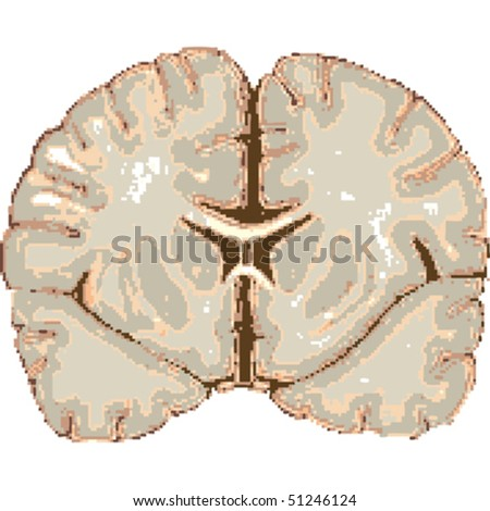 human brain isolated on white background, abstract vector art illustration