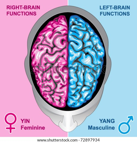Human brain left and right functions vector