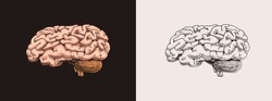 Human brain. Nervous system. Retro vector illustration for woodcut or print. Hand drawn sketch.