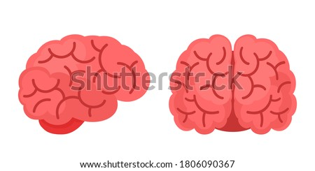 Human brain side and front view, isolated on white background, flat cartoon style. Vector illustration.