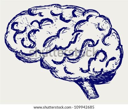 Human brain. Sketch