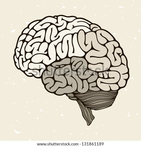 Human brain, vector illustration