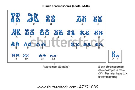 How are the human sex chromosomes labeled Nude Photos 63