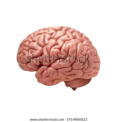 human colored brain with copyspace for your text or images.Vector EPS 10 illustration