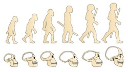 Human Evolution Of The Skull. Historical Illustrations. Isolated Vector. Human Evolution Definition. Human Evolution Theory. Human Evolution Facts. Human Evolution Poster. Human Evolution Evidence.