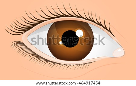 human eye  brown eyes