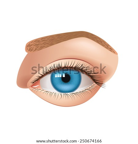 human eye isolated on white