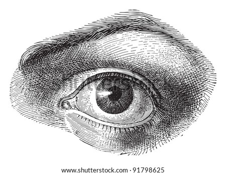 Human eye - Vintage illustration from Meyers Konversations-Lexikon 1897