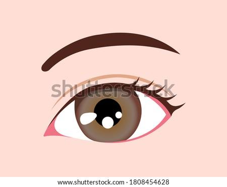 human eyeball   eye color