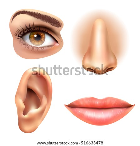 Human face parts 4 sense organs icons square collection of eye nose mouth and ear realistic vector illustration