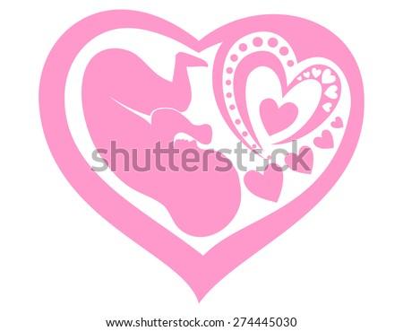 human fetus inside the womb