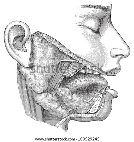 Human head anatomy - nose, mouth and throat / vintage illustration from Meyers Konversations-Lexikon 1897