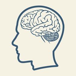 HUMAN HEAD AND BRAIN illustration vector