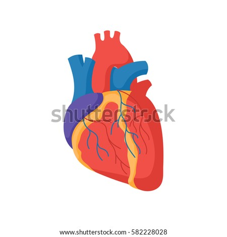 Human heart anatomy. Organs symbol. Vector illustration in cartoon style isolated on white background
