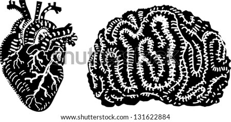 Human Heart Vector Image Human Heart And Brain