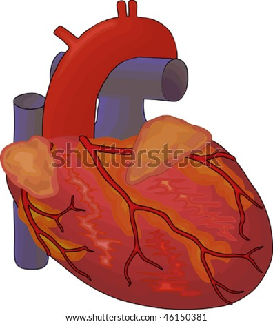 u414adad: heart diagram without labels, Muscles