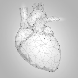 Human Heart Internal Organ Triangle Low Poly. Connected dots white gray neutral color technology 3d model medicine healthy body part vector illustration