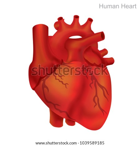 Human Heart Isolate, Illustration.