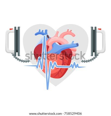 human heart  modern