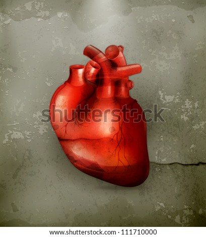 Human heart, old-style vector