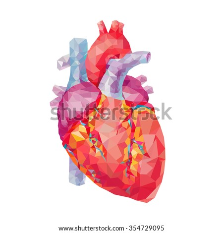 human heart polygonal graphics