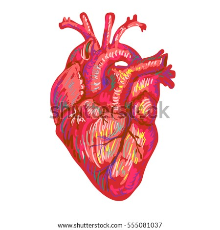 vector images illustrations and cliparts human heart sketch design