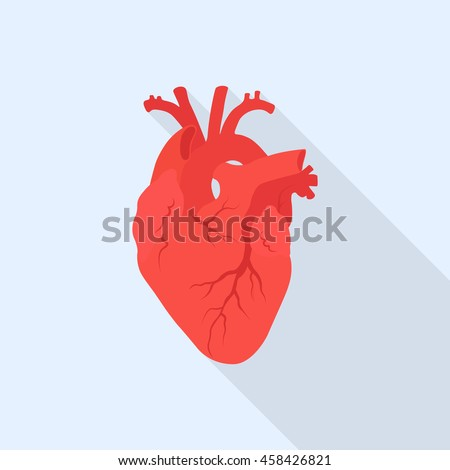Human heart vector icon. Internal organ. Red heart with long shadow. Anatomy concept. Flat design