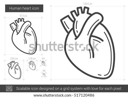Human Heart Medical illustration vector illustration