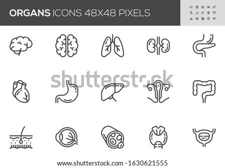 Human Internal Organs Vector Line Icons Set. Anatomy, Brain, Heart, Bladder, Blood Vessel. Editable Stroke. 48x48 Pixel Perfect.