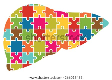 human liver jigsaw puzzle