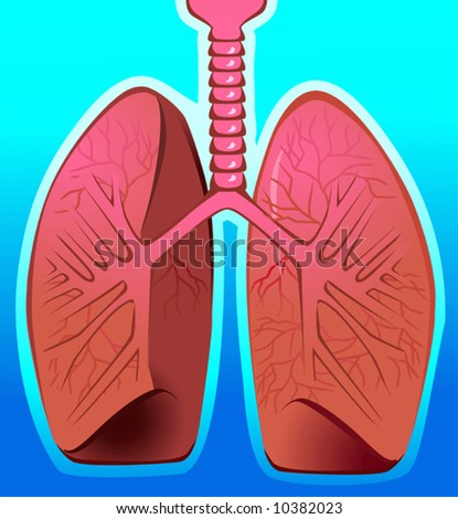 human lungs in blue background