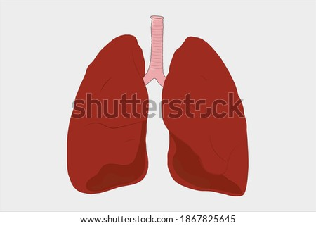 Human Lungs vector. Human anatomy. Stok fotoğraf ©
