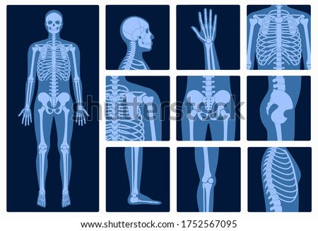 Human man skeleton anatomy and parts of male body on x ray view. Vector isolated flat illustration of skull and bones on reontgen. Medical, educational or science banner