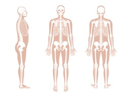 Human man skeleton anatomy in front, profile and back view. Vector isolated flat illustration of skull and bones in body. Halloween, medical, educational or science banner