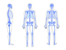 Human man skeleton anatomy in front, profile and back view. Vector isolated flat illustration of skull and bones in body. Halloween, medical, educational or science banner.