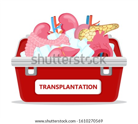 Human organ donor transplantation concept vector for banner, flyer, medical website. Medical red case with ice. World organ Donor Day or Week. Intestine, heart, kidneys, pancreas are shown.