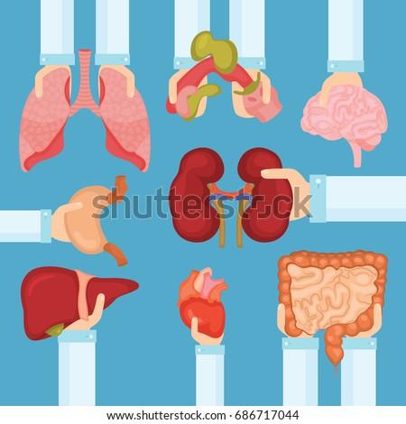 Human organ for transplantation concept with hands, medical banner. Vector illustration.