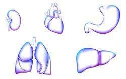 Human organ icon symbol medicine logo set. Lungs heart kidney liver stomach internal organ. Pharmacy banner doctor online vector illustration