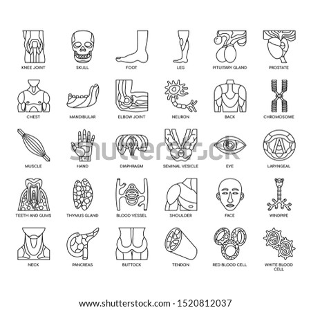 Human Organ , Thin Line and Pixel Perfect Icons