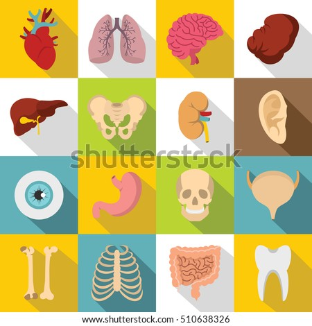 Human organs icons set. Body, kidney and tooth flat icons. Biology vector illustration