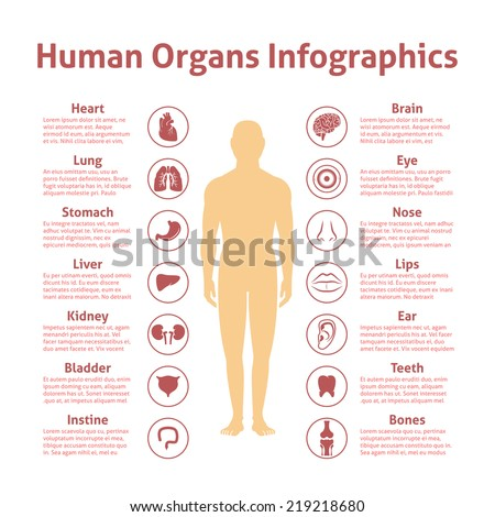 human organs icons with male