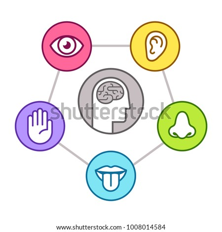 Human perception infographic scheme. Five senses (sight, smell, hearing, touch, taste) as represented by organs, surrounding brain. Line icon set, vector illustration.