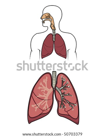 Human respitory system in vector