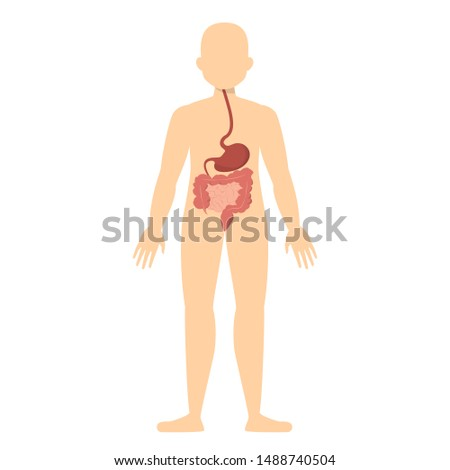 Human silhouette and digestive system. Stomach and intestine. Gastroenterology concept. Isolated vector illustration in cartoon style Сток-фото ©