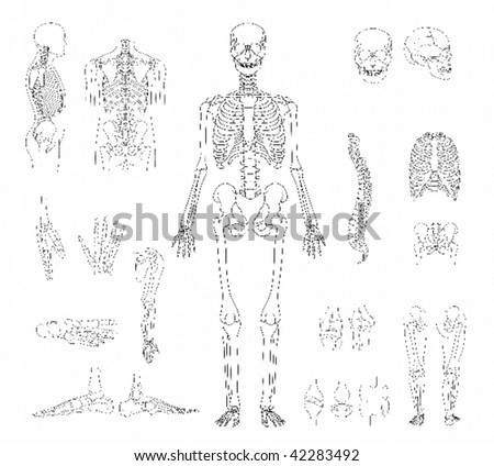 human skeleton skull. girlfriend human skeleton