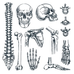 Human skeleton, bones and joints, isolated on white background. Vector hand drawn sketch illustration. Doodle anatomy icons set