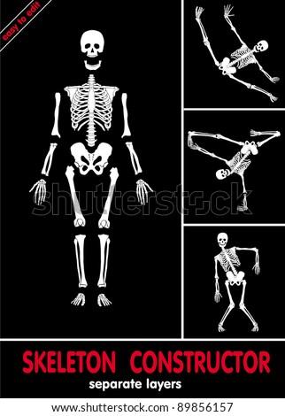 human skeleton bones on