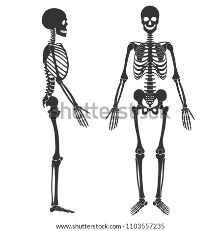 Human skeleton in front and profile. Black silhouette isolated on white background. Vector illustration