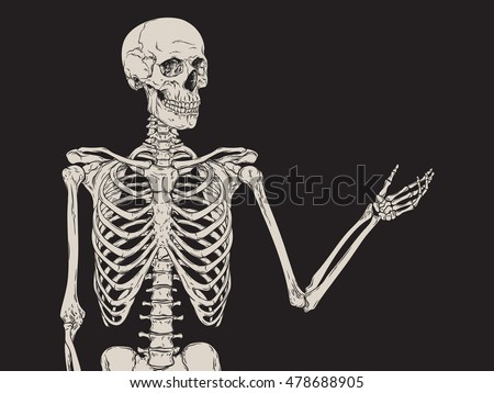 human skeleton posing isolated