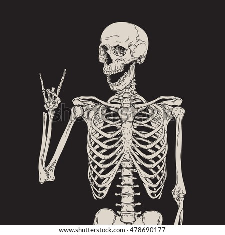 human skeleton posing isolated